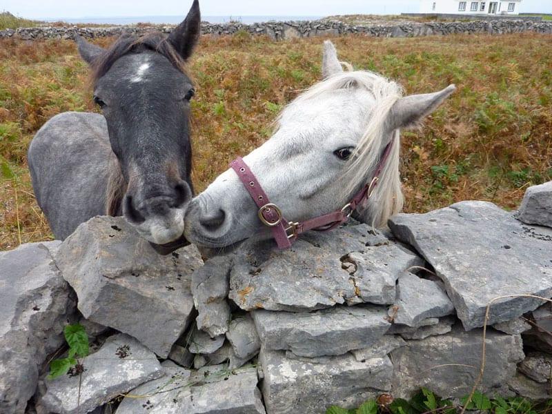 horses on Aran Island