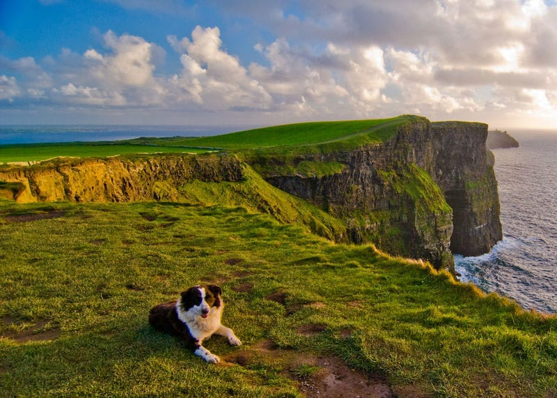 Cliffs of Moher with border collie