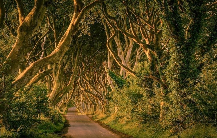 Dark Hedges Sunlight